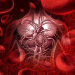 16456557 - blood system and circultaion with a human heart cardiovascular icon with anatomy from a healthy body on a background with blood cells as a medical health care symbol of an inner organ as a medical health care concept